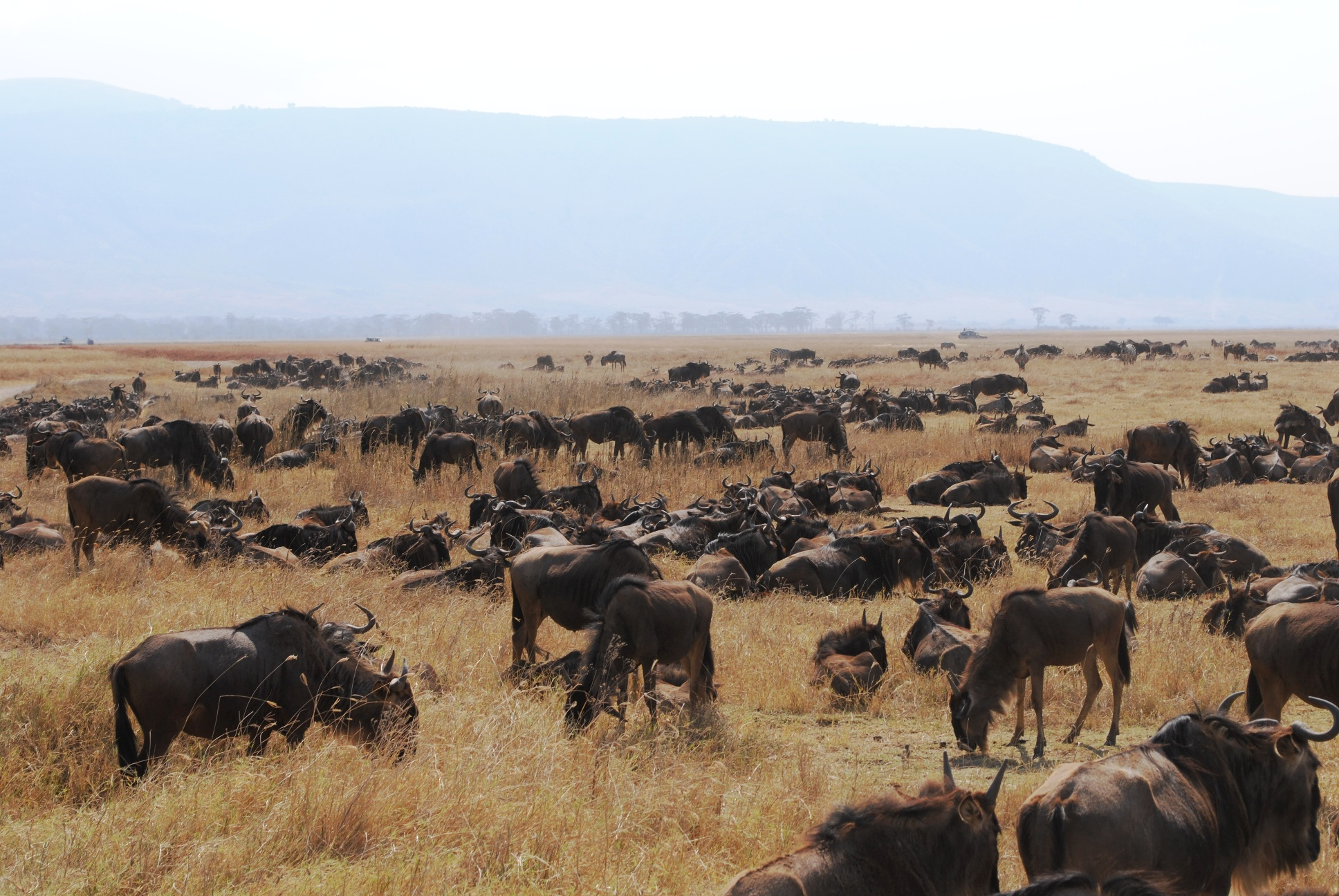 Great Migration In The Serengeti